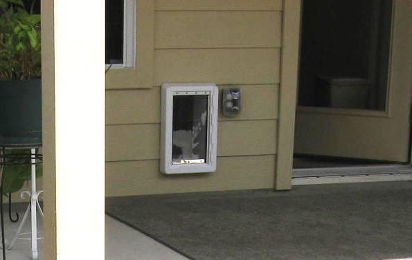Through The Wall Dog Door Images Doors Design Modern